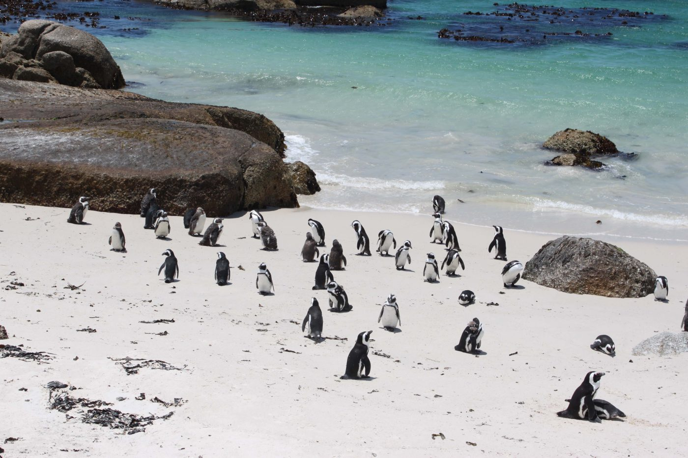 Boulders Beach, Cape Tour, South Africa