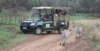 Game drive, Ivory Tree Lodge, South Africa