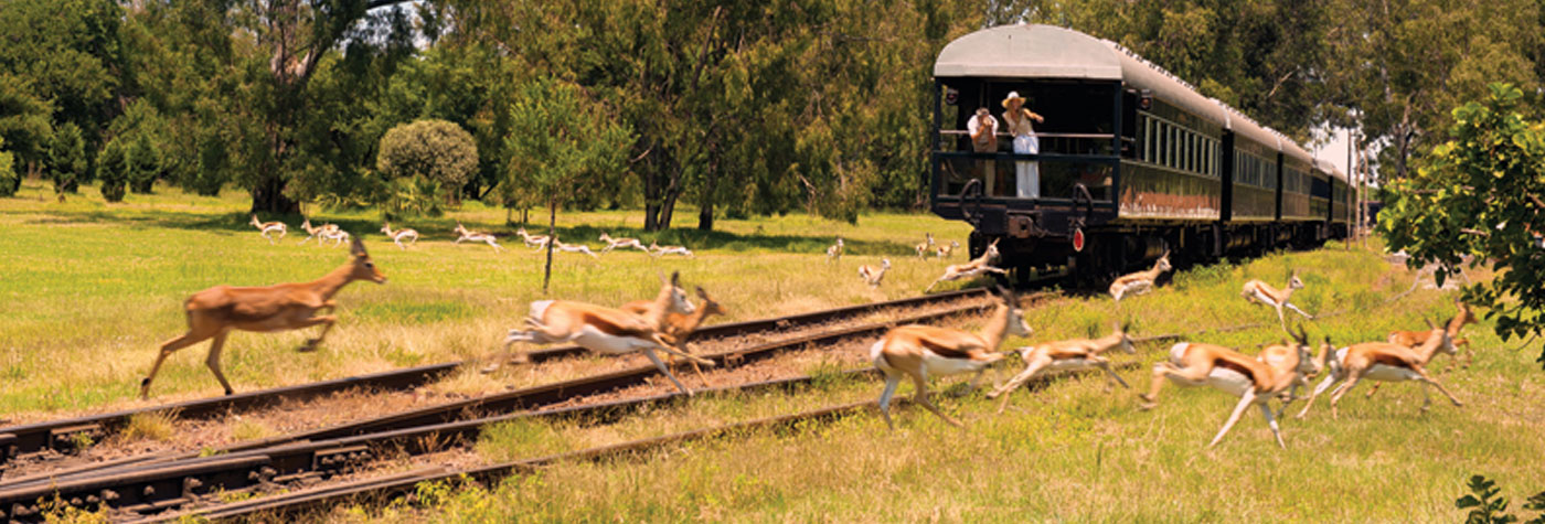 Rovos Rail wildlife